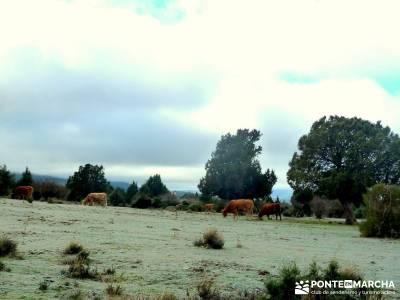 Acebos Montes Carpetanos; fin de semana senderismo; clubs montaña madrid